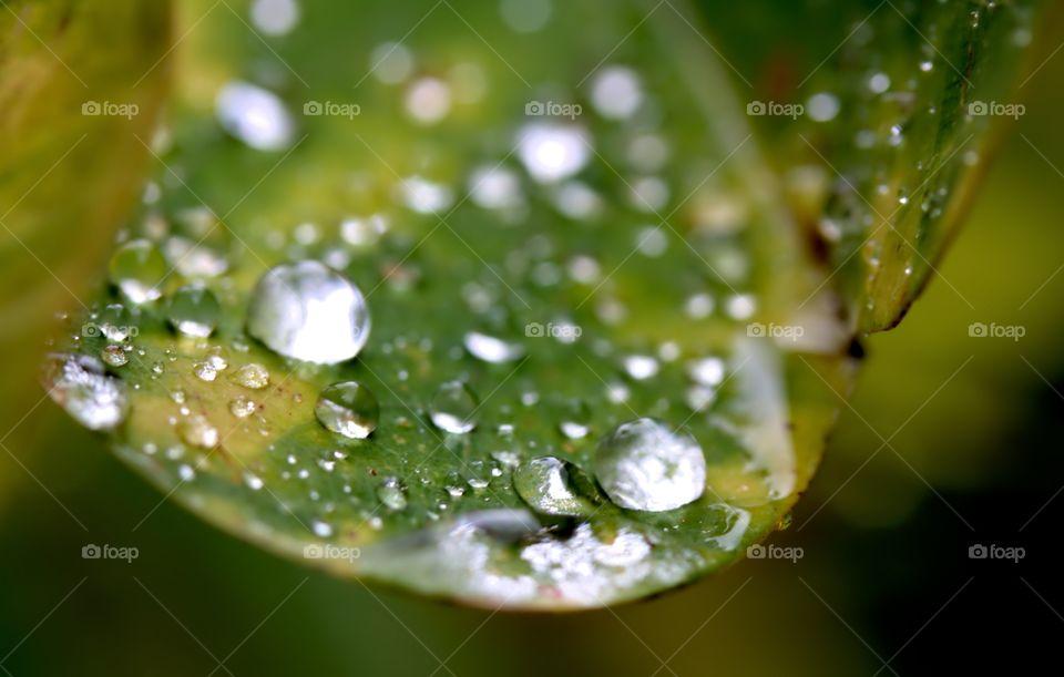 rain drops on sun soaked leaf - find me on Instagram under atenakomar
