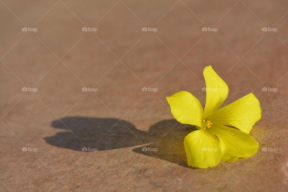 Beautiful yellow flower on the floor.