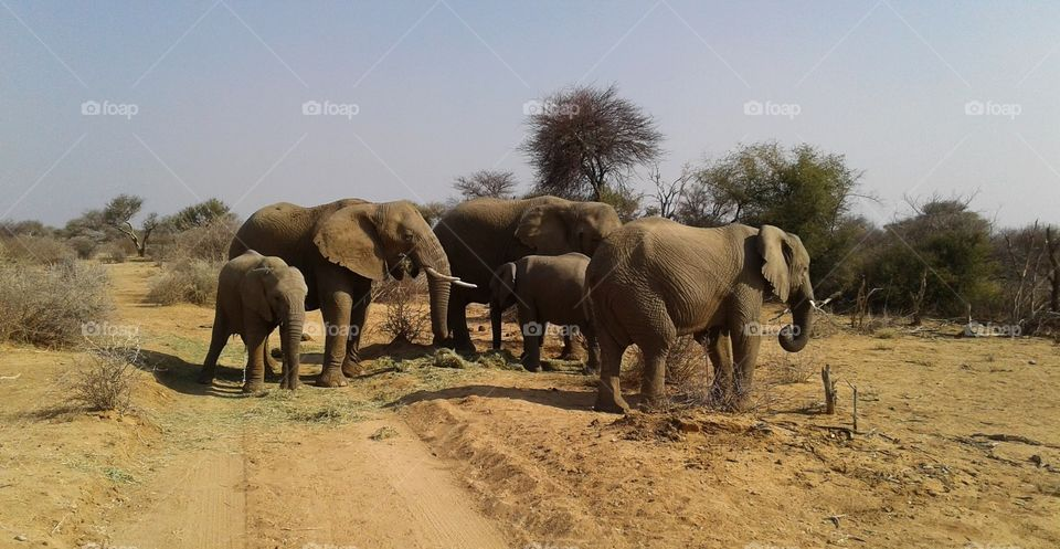 Elephant herd in the bush
