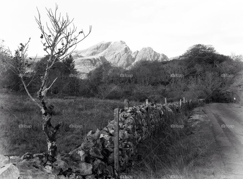 landscape field nature fence by resnikoffdavid