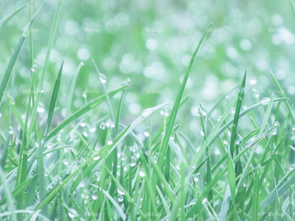 Fresh morning grass With dew drops - White x Green Mission