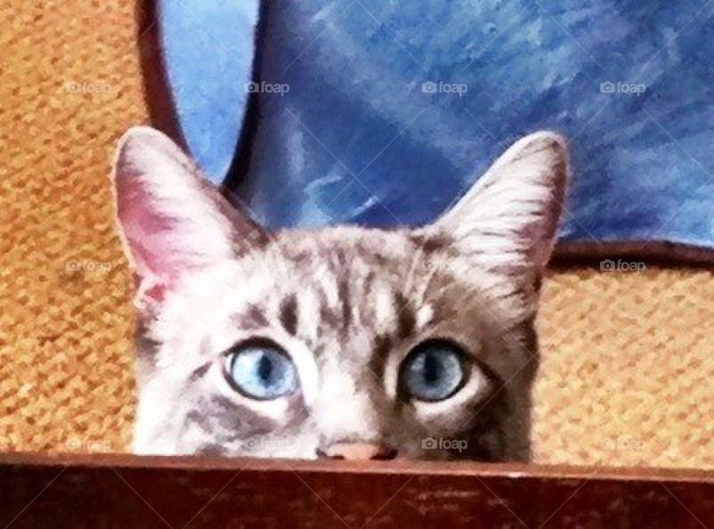 My blue eyed boy. Cat peaking over coffee table.