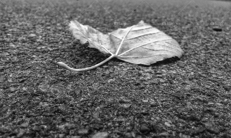 Dry leaf on the land