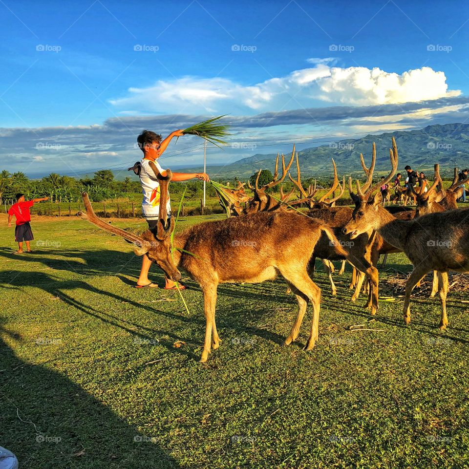 Feeding time our dear deer! Very beautiful deer and pacific santa's!