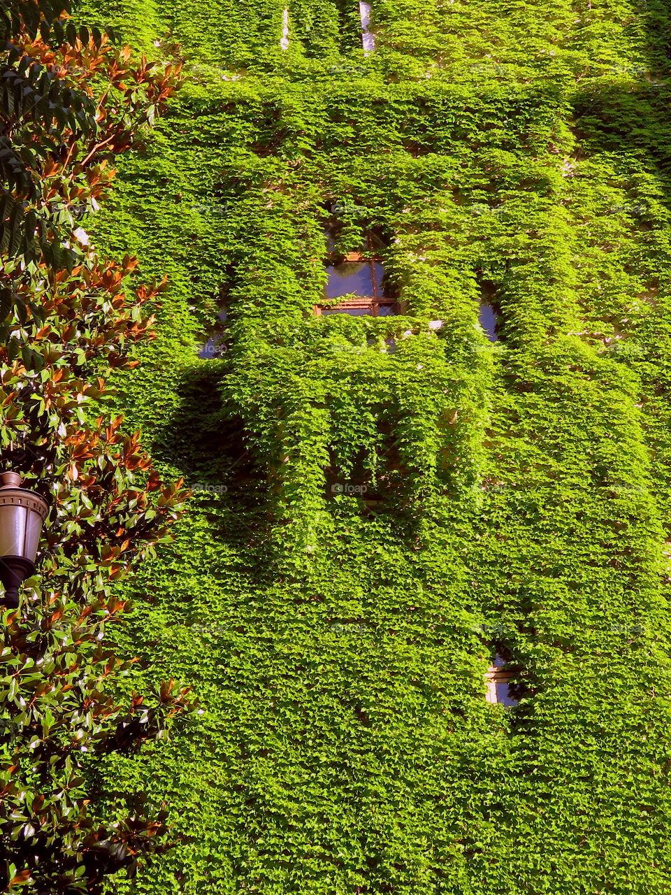 Urban green waterfall