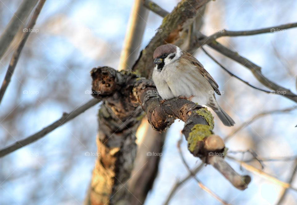Sparrow perching on tree branch
