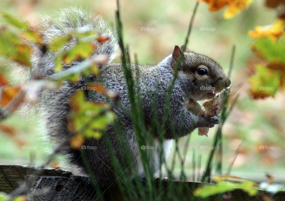 Squirrel searching for food