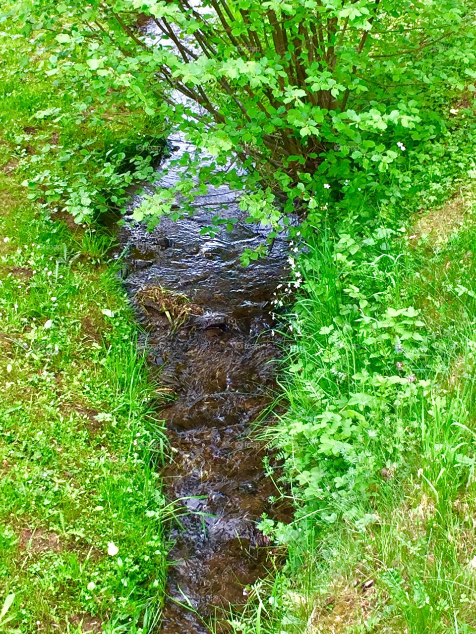 Spring Creek. Morbach, Germany