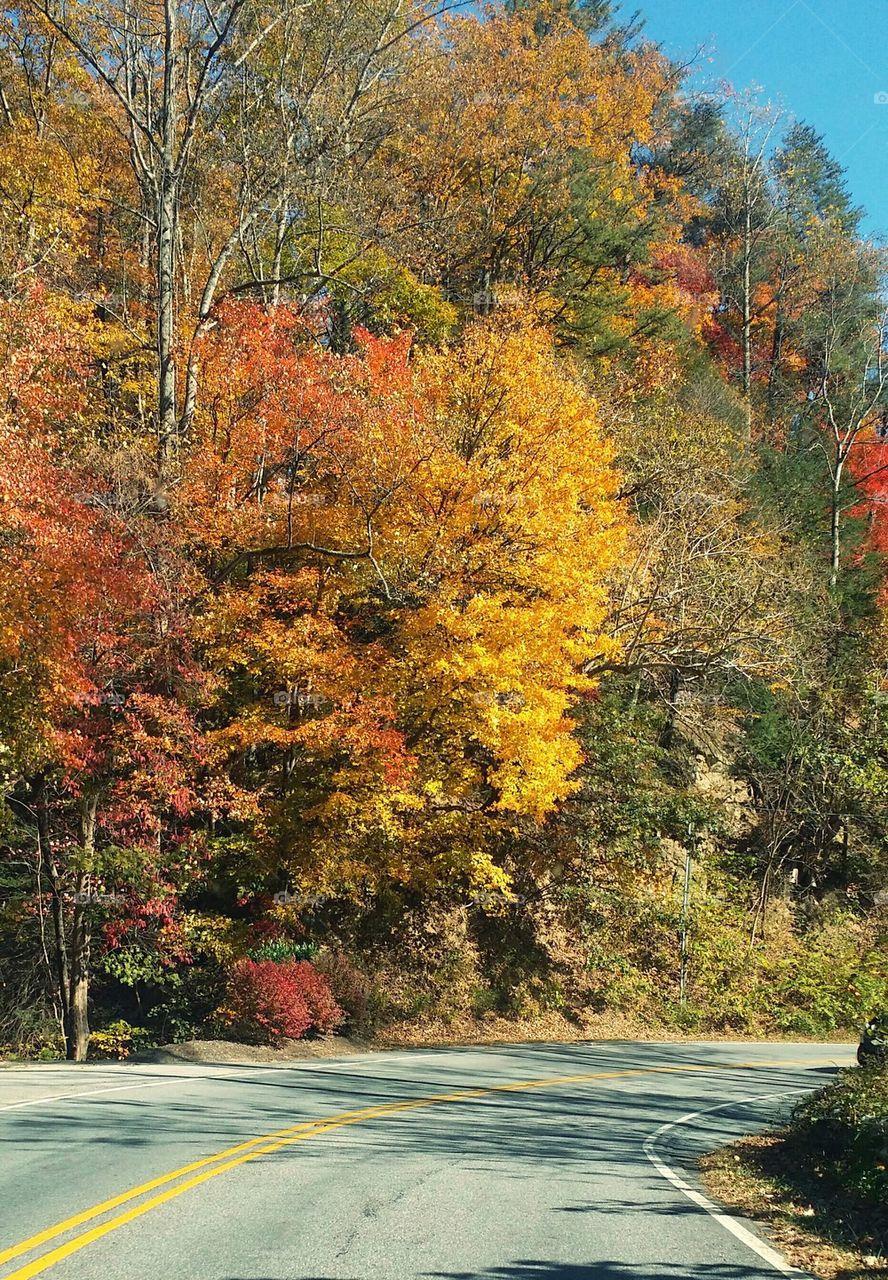 A road passing through autumn trees