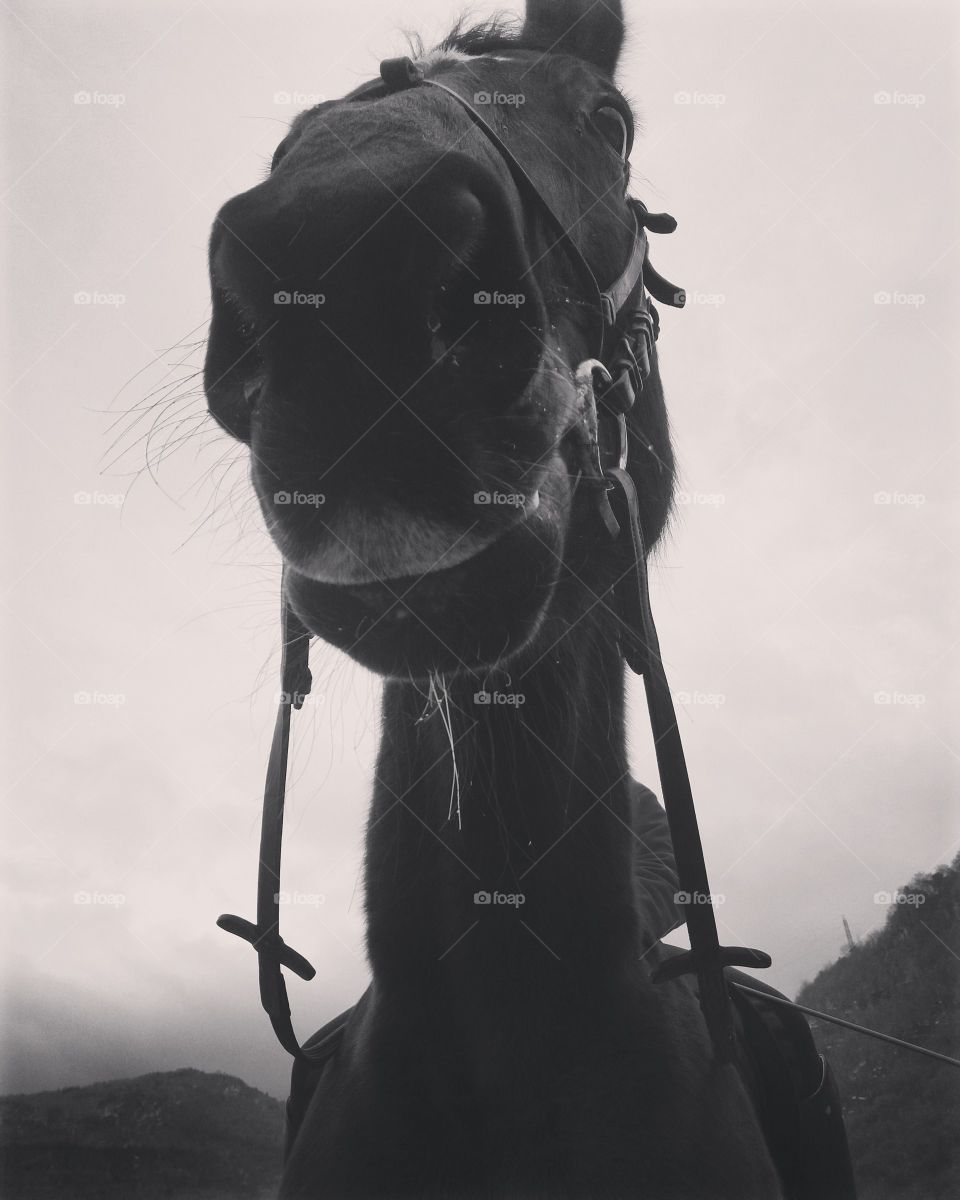 A closeup black and white shot of a horse muzzle with a cloudy sky on background