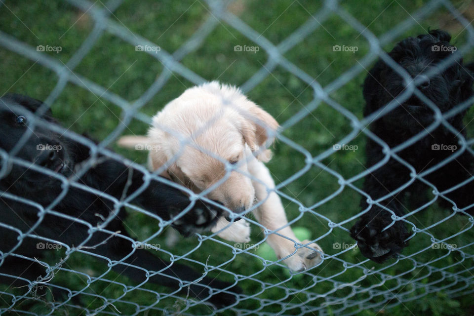 puppy on fence