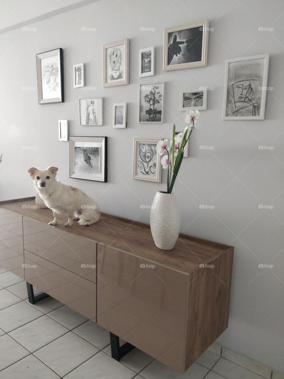 Cute dog sitting on the buffet cabinet in the living room