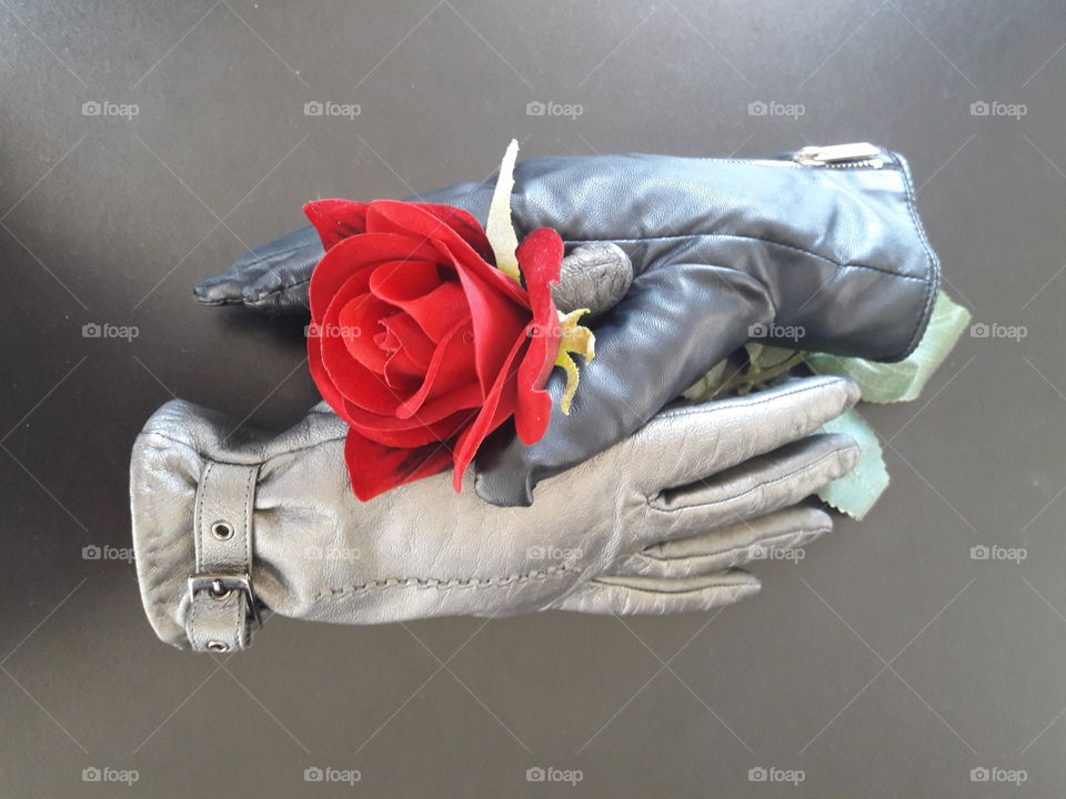 Red rose in two gloves