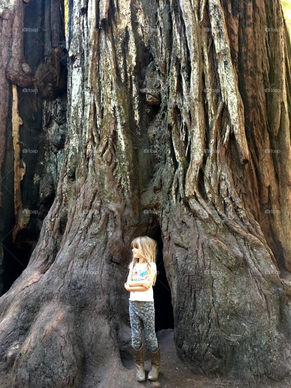 Giant California tree and little girl