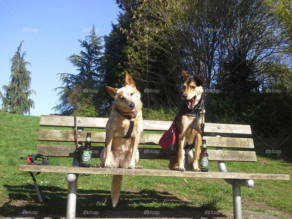 hiking dog friends