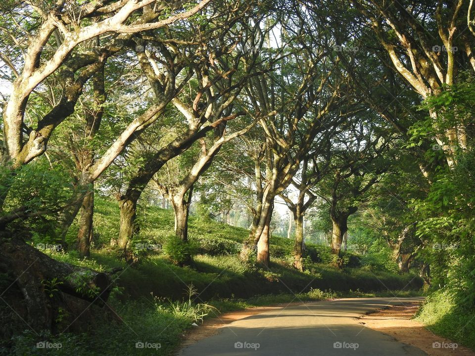 Majestic trees providing shade and O2