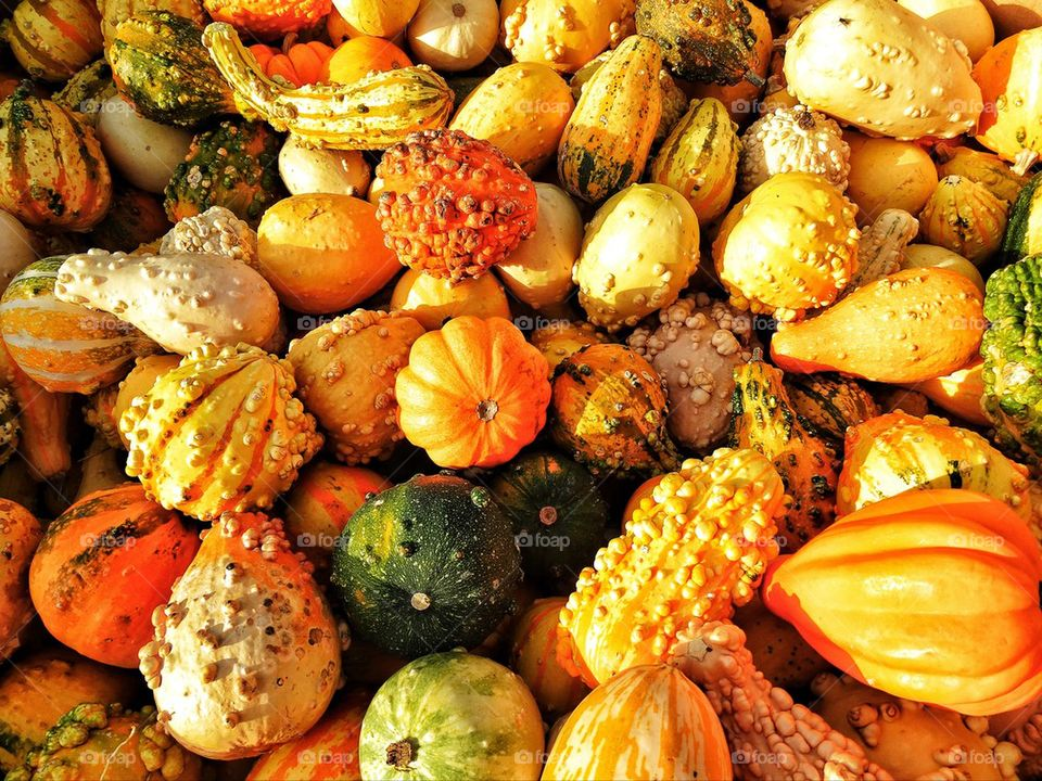 Colorful variety of pumpkins at harvest time for Halloween
