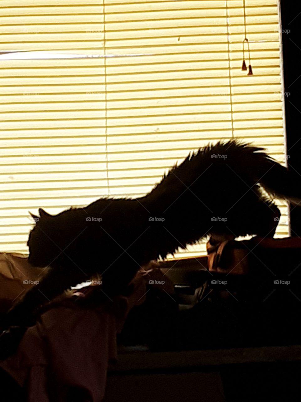 A cat stalking a stinkbug.