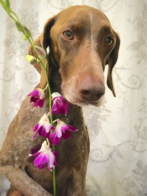 Portrait of dog with flower