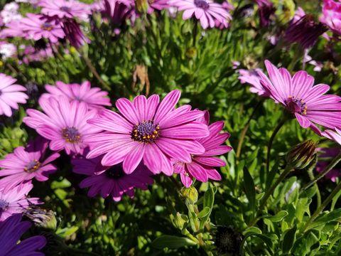 Beautiful blooming flowers in field