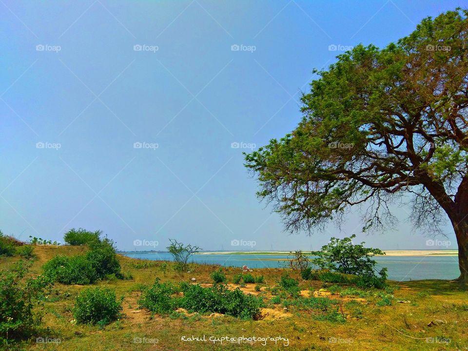 Nature & tree