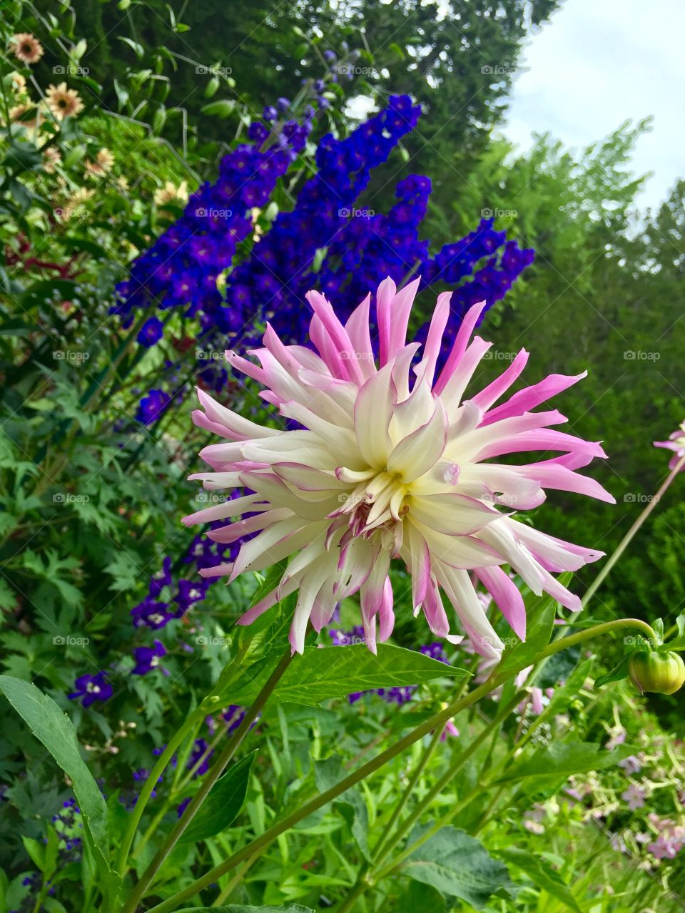 Thuya garden is the hidden gem in Acadia national park, Maine. Refreshing fragrances all around the garden...