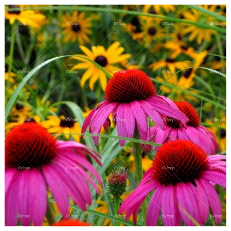 Wildly Colorful Flowers