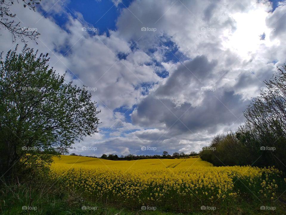 raps feld blühen Blüten gelb yellow himmel blau wolken schönes Wetter feld