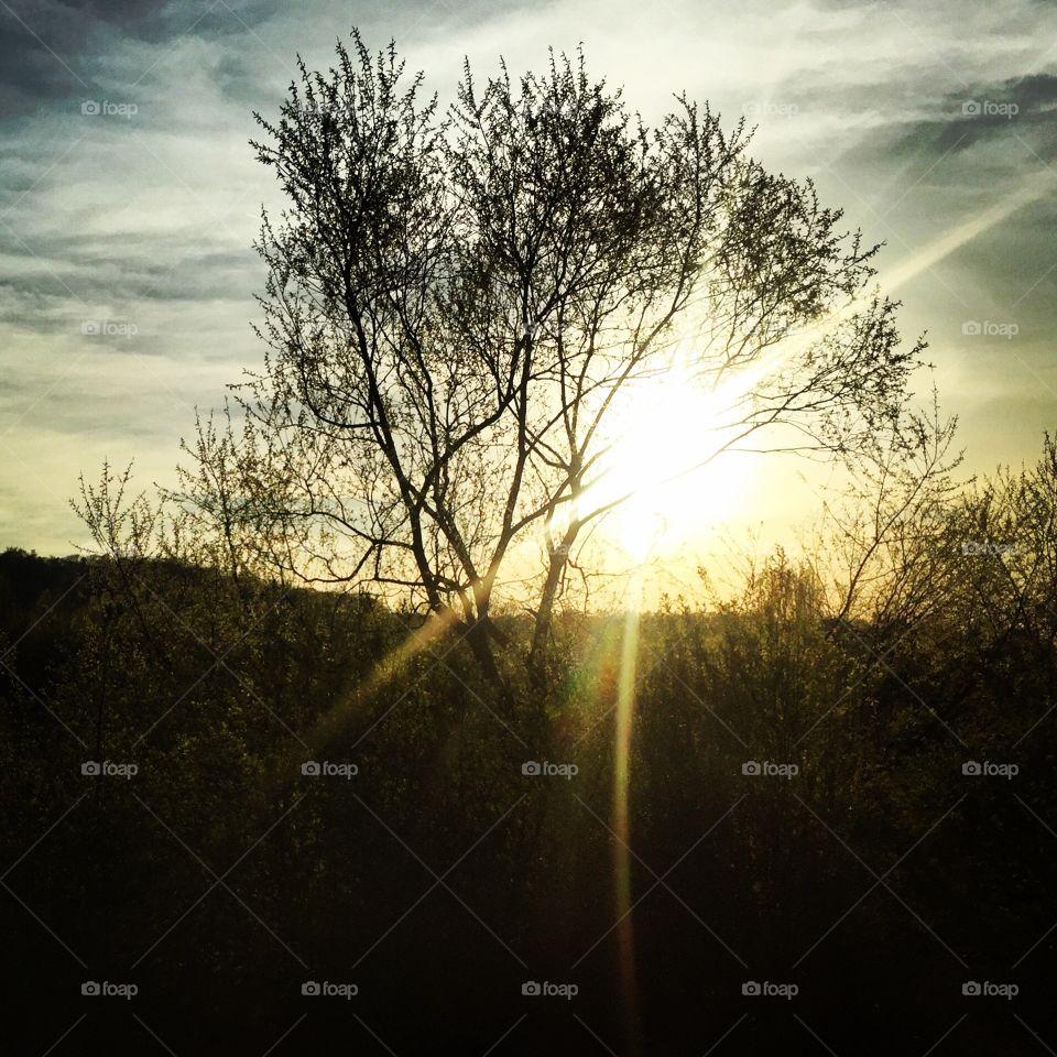 Sun. Sun in the Tree
