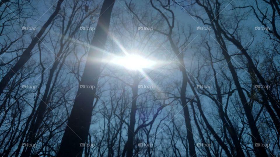 Weather, Dawn, Nature, Landscape, Tree