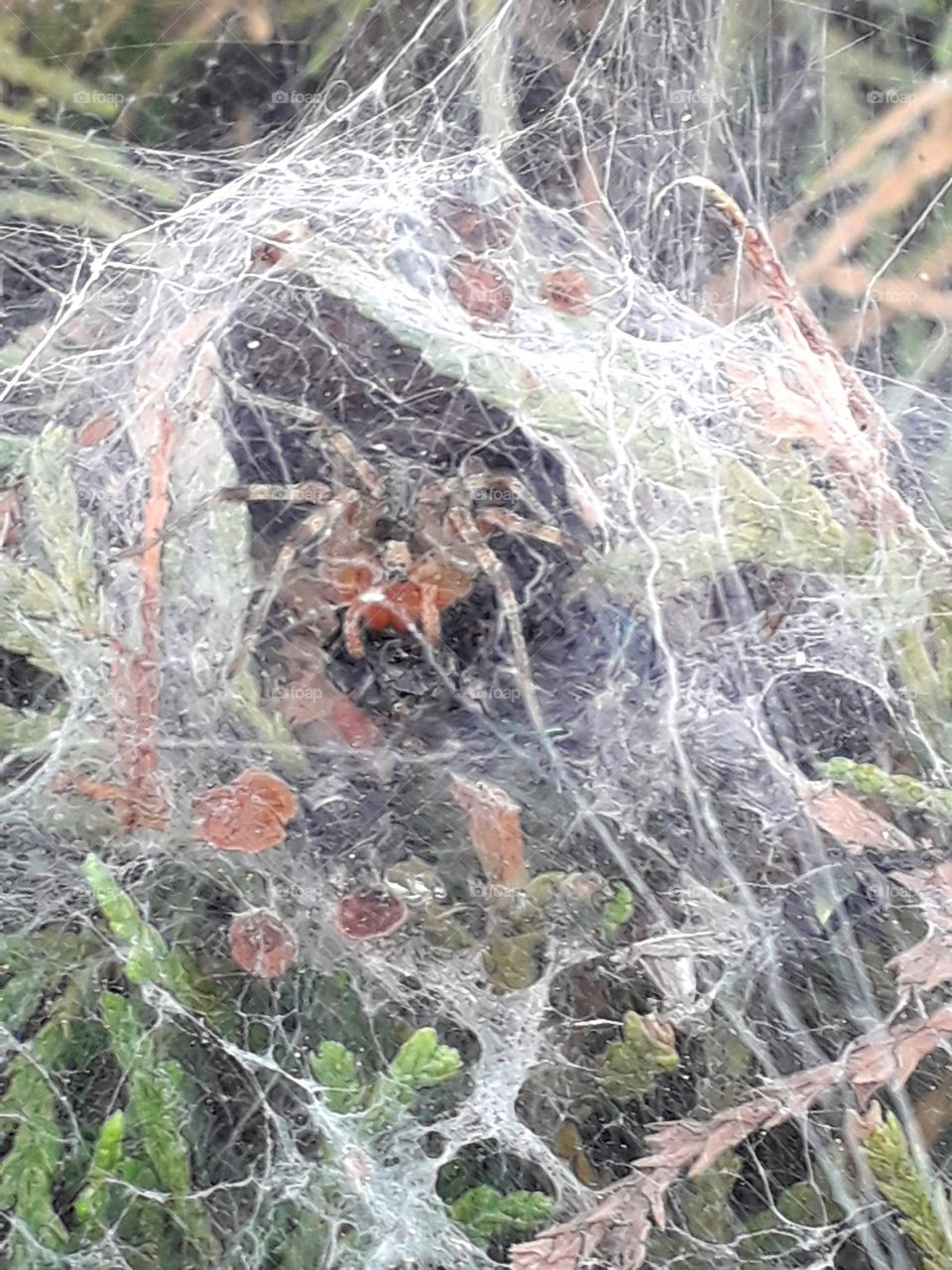 Spider net and home