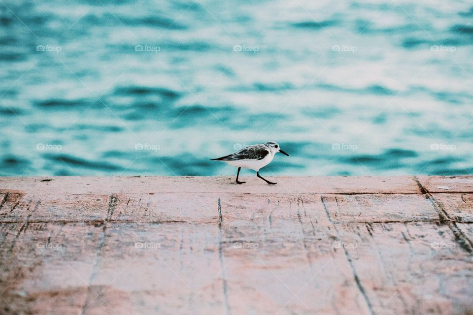 Little bird on a dock in the morning