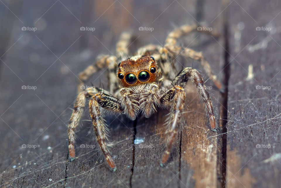 a beautiful macro-photo of a cute jumping spider