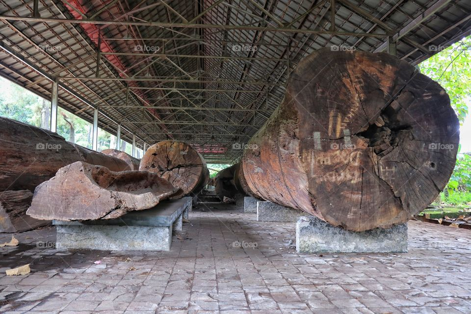 Old teak logs, kept in botanical museum of Indonesia Miniature Garden