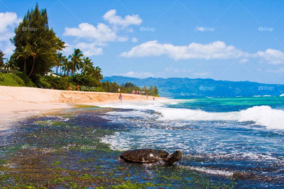 Turtle enjoying the sunshine in Hawaii