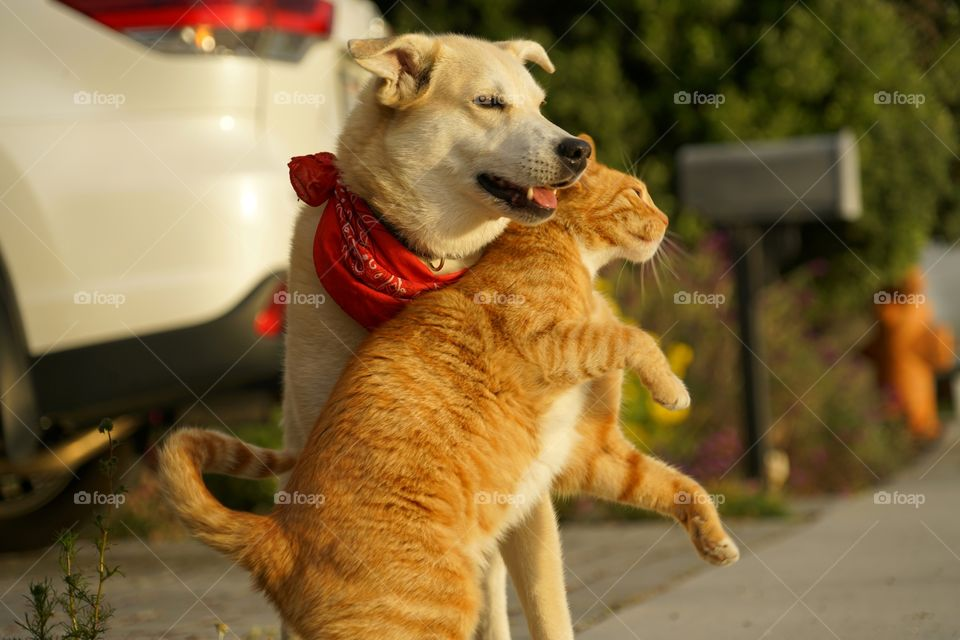 Dog And Cat Are Friends