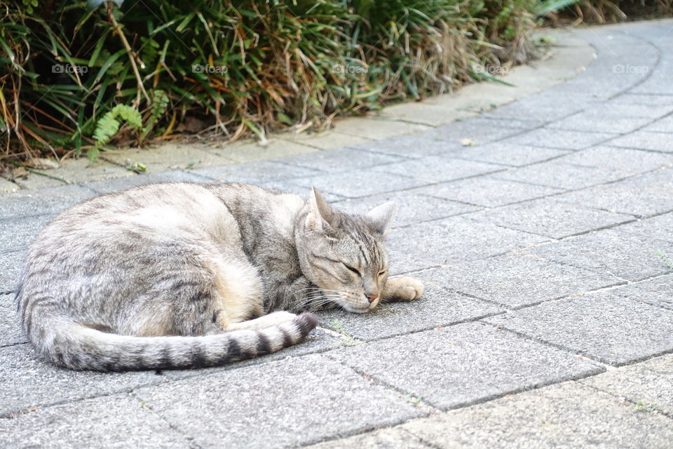 A sleeping tabby cat on the road.