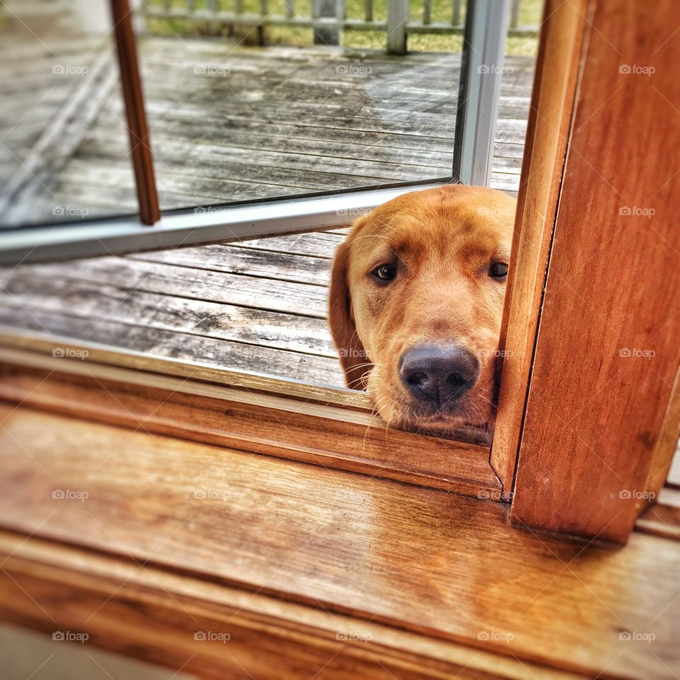 Please, May I Come In?