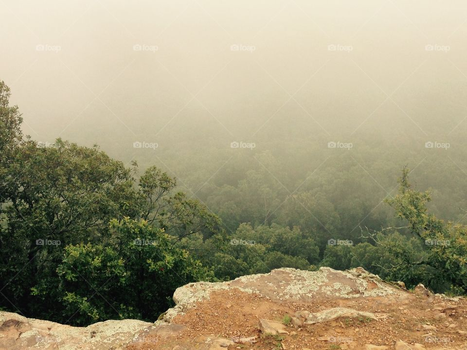 Fog over trees at Mount Nebo