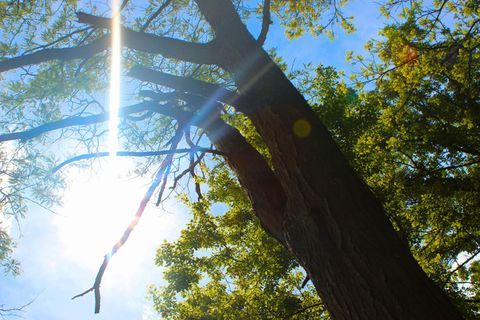 Sunlit Tree. Beautiful Tree under The Sun