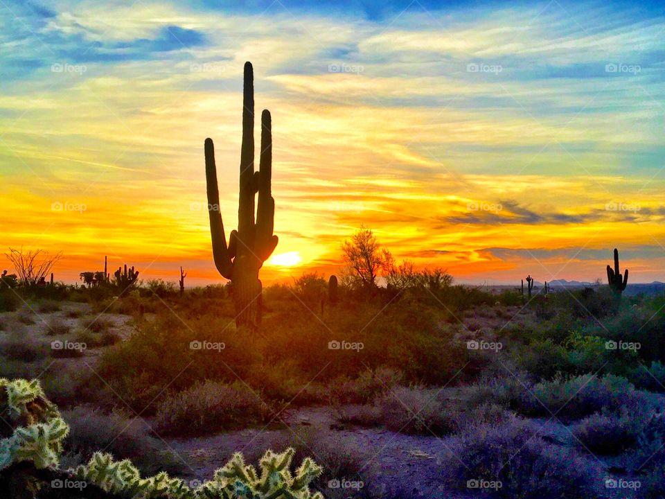 Cactus landscape during sunset