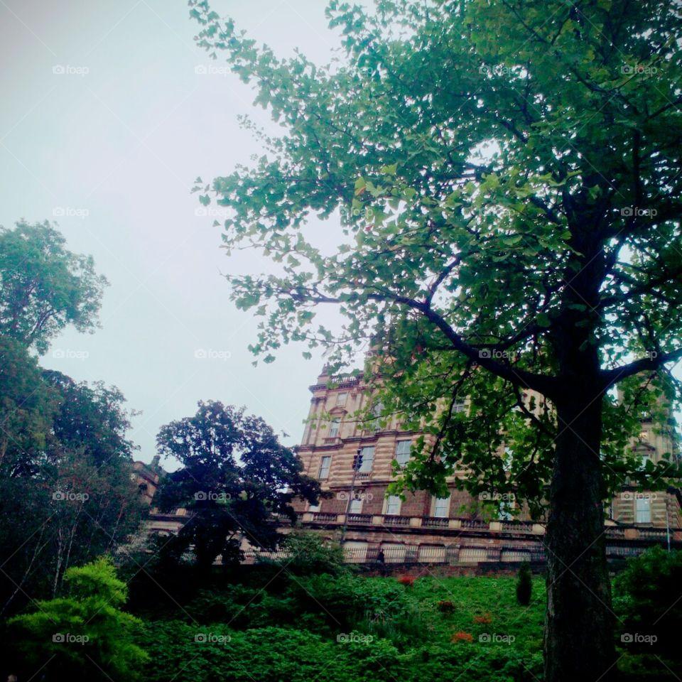 Tree, Landscape, No Person, Park, Nature