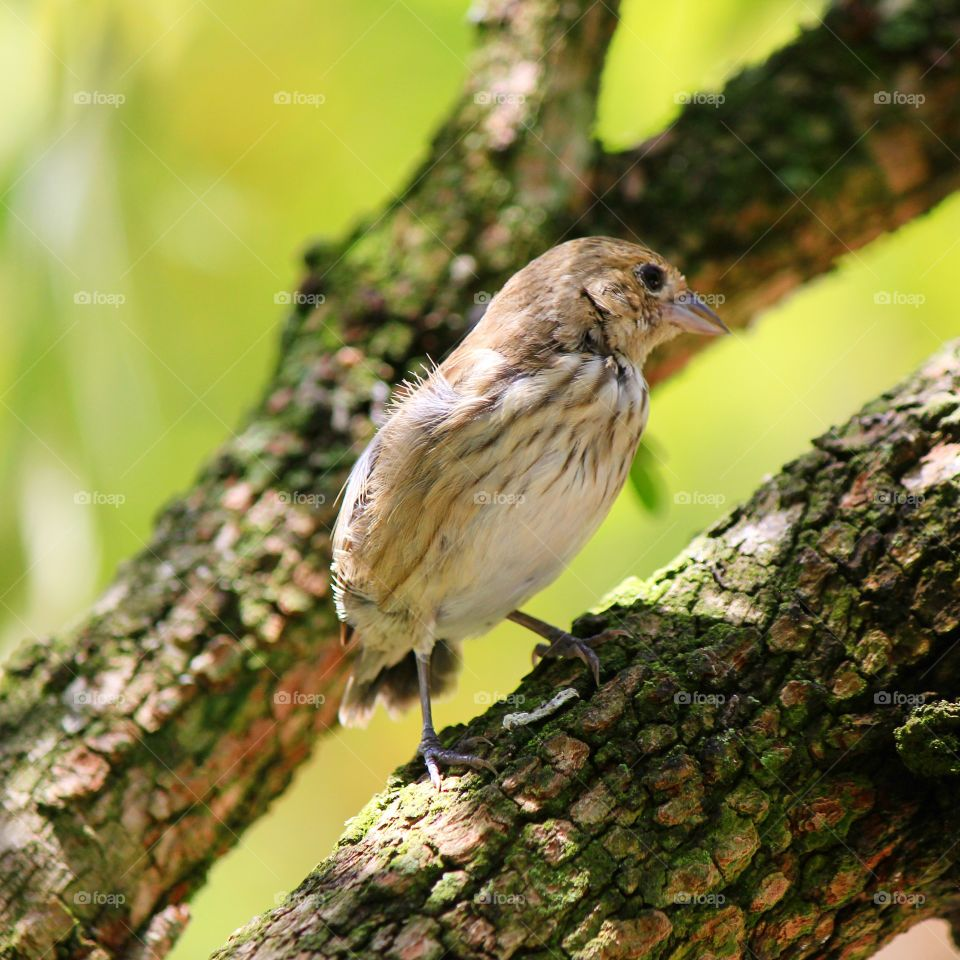 Close-up of sparrow perching on tree