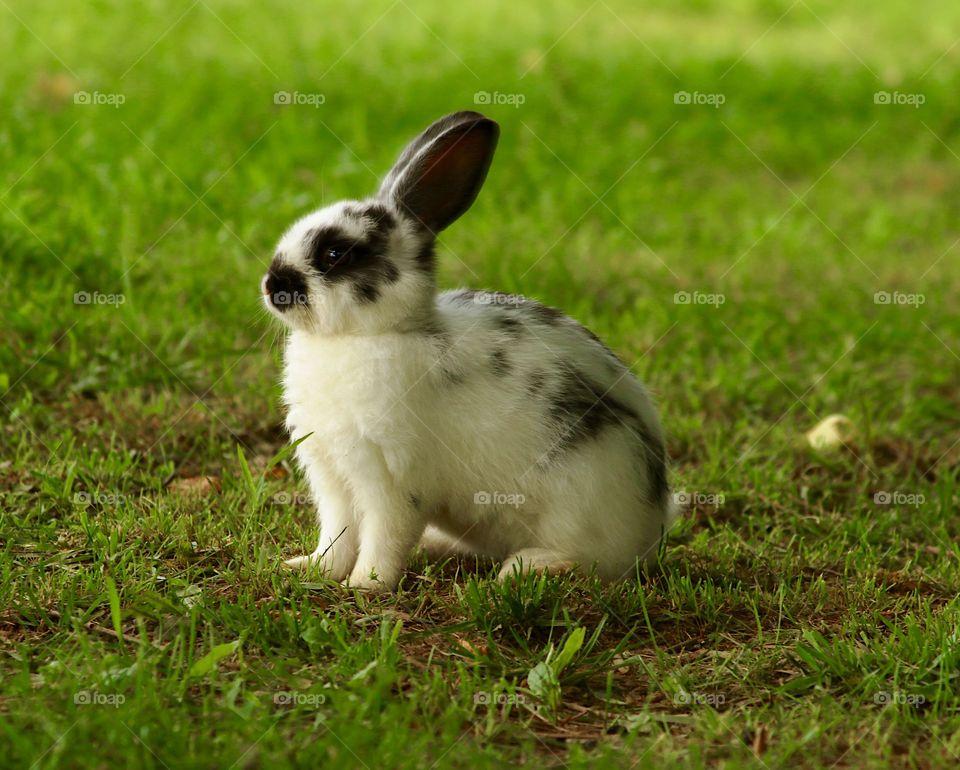 Baby bunny pose