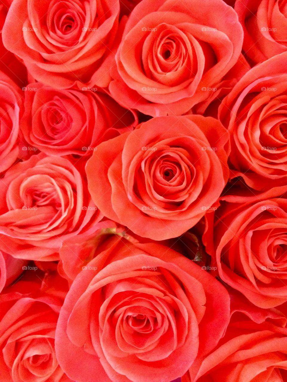 Full frame of beautiful red roses