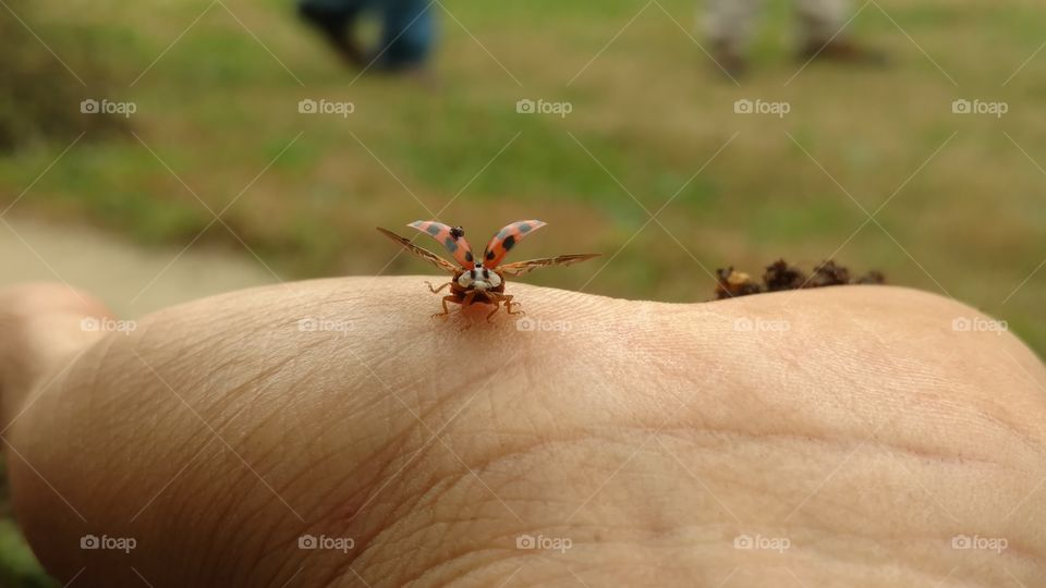 Insect, Wildlife, No Person, Nature, Outdoors