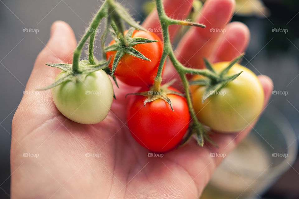 It's an amazing feeling to harvest your own vegetables! Fresh, healthy and grown with love.