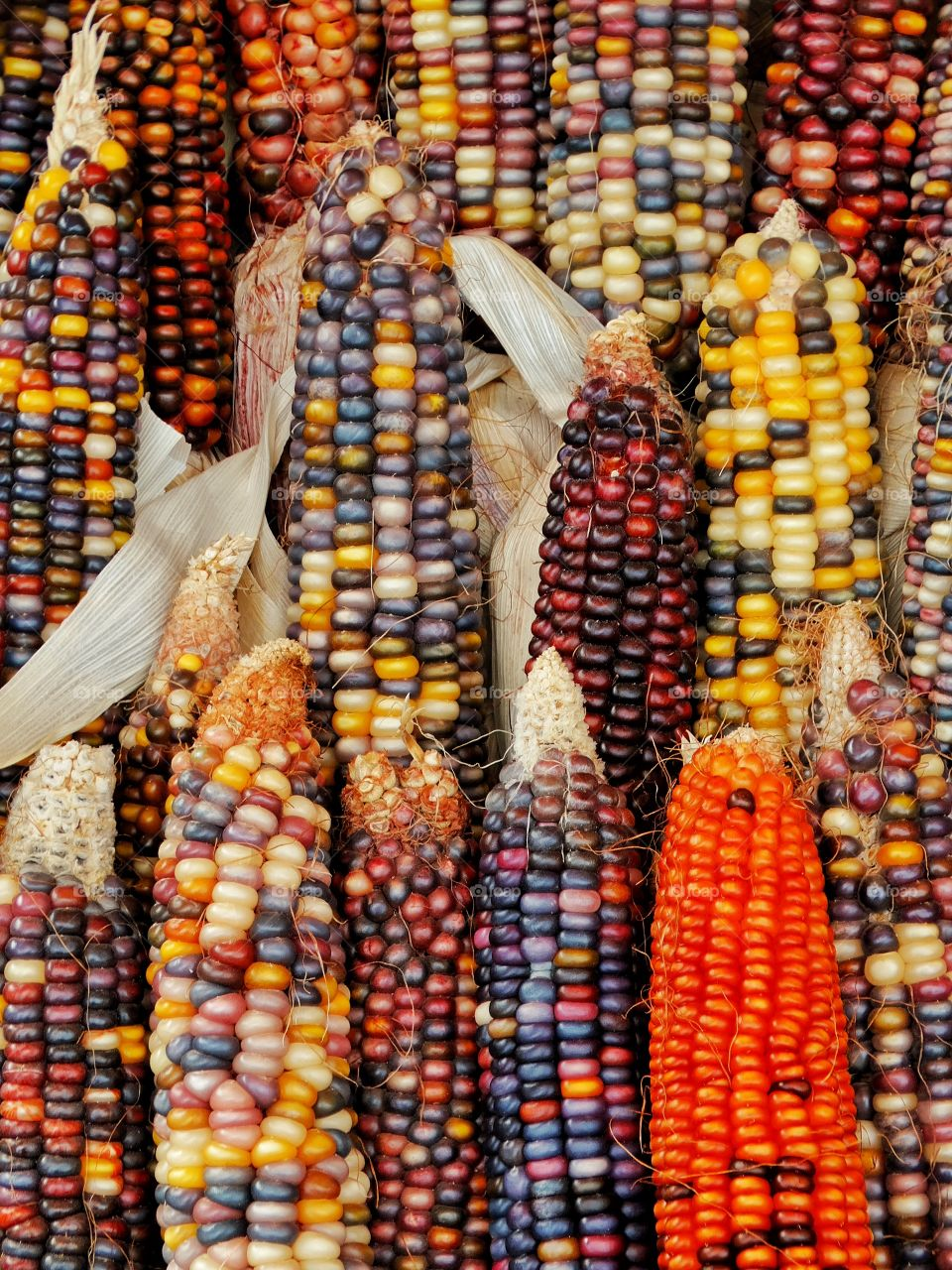 Full frame of a colorful corn