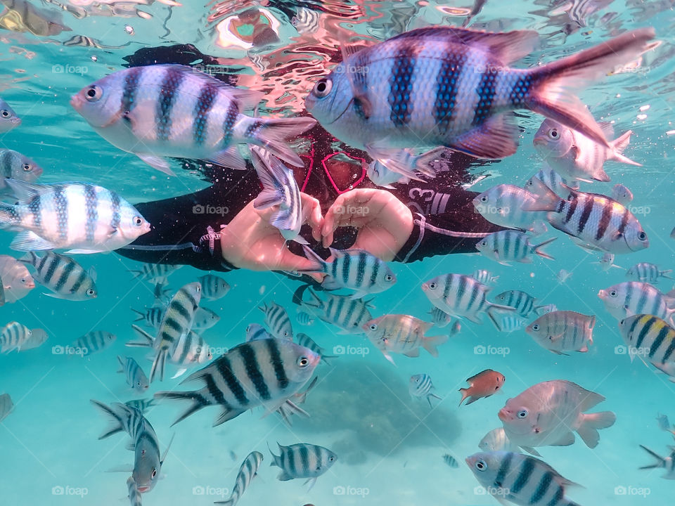 Swimming with fishes