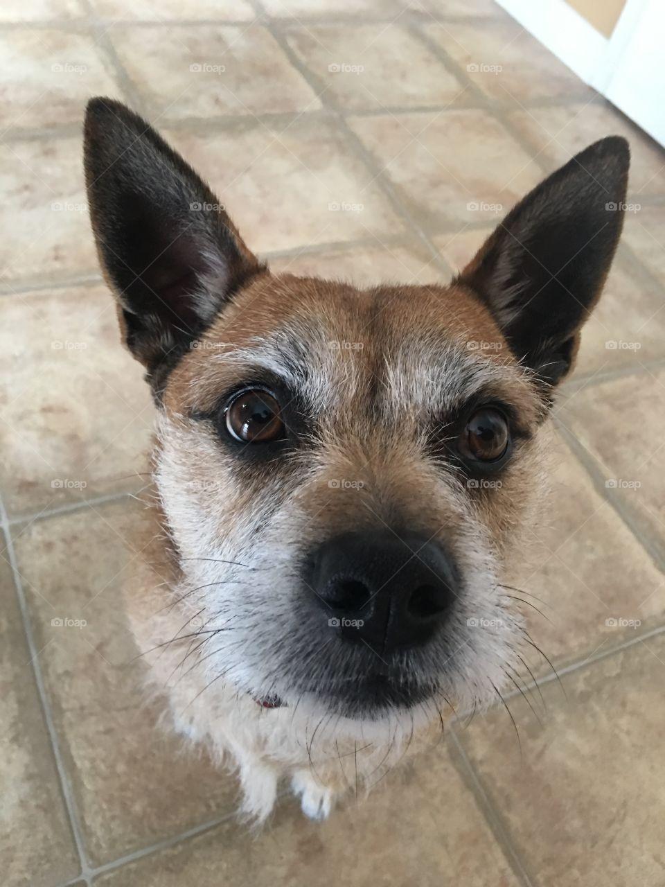 Looking down at my cute puppy dog Dog looking up at camera
